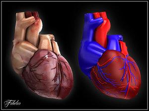 human heart max