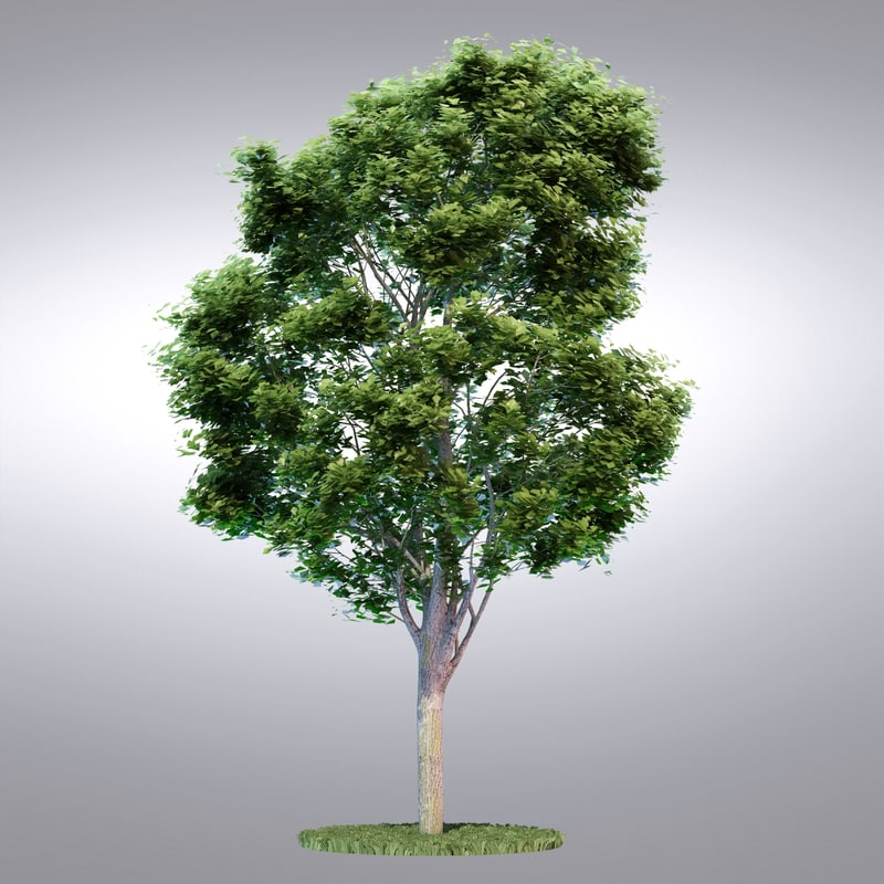 3d hi realistic series tree