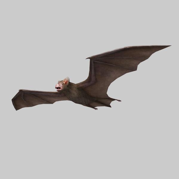 bat vampire 3d model