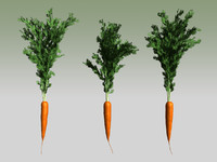 carrot use max