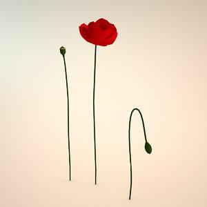 3d model of poppy