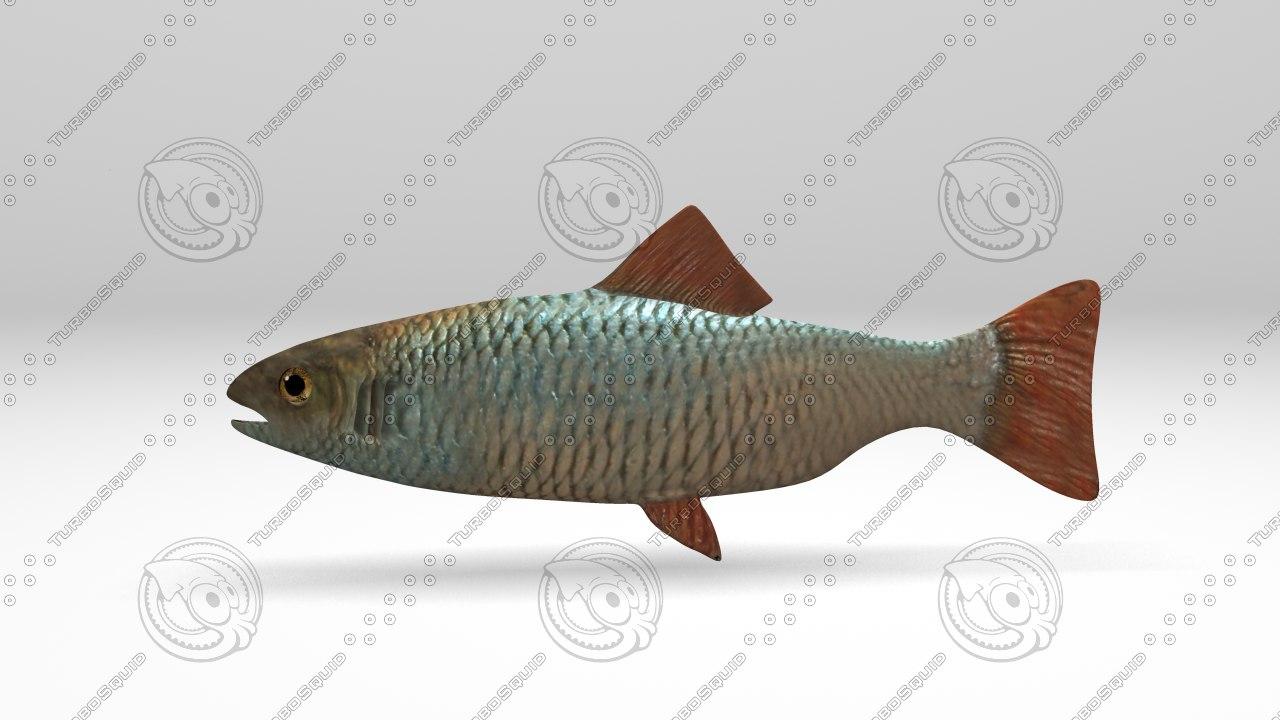 fish 3d ma