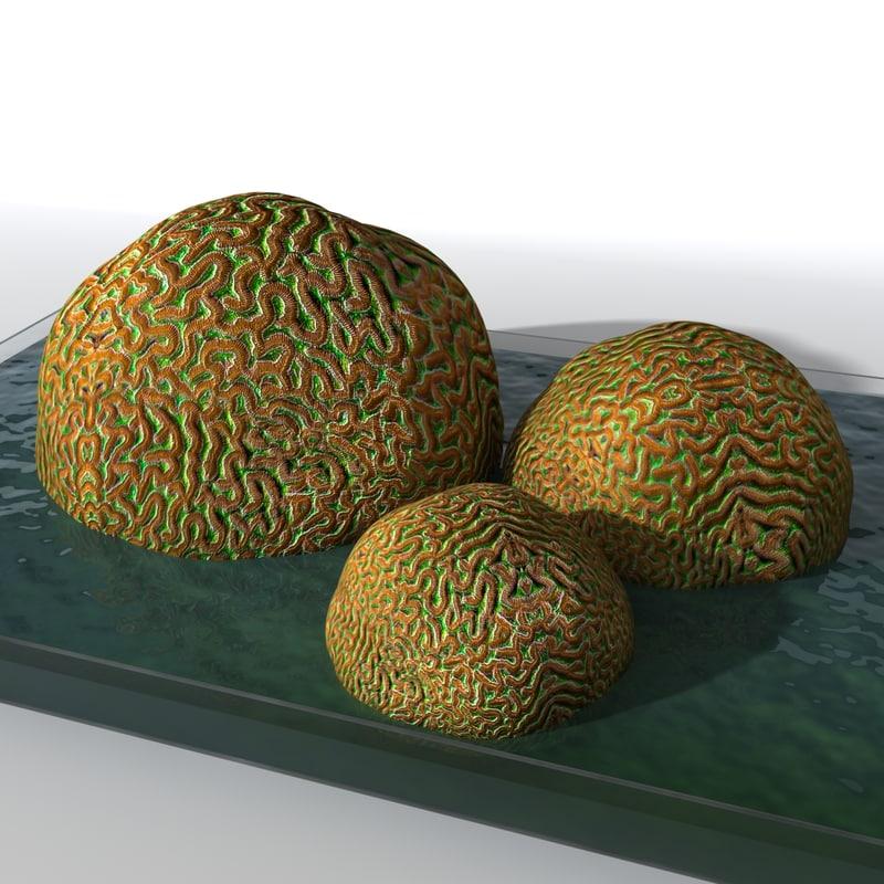 coral rock 3d model