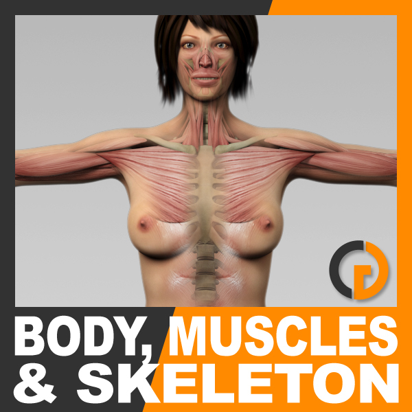 3ds max anatomically human female body