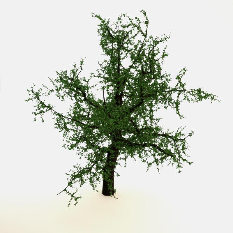 3d model of oak tree