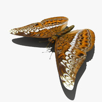 tiger butterfly insect fly 3d max