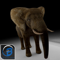 3d fbx elephants anatomy tusks