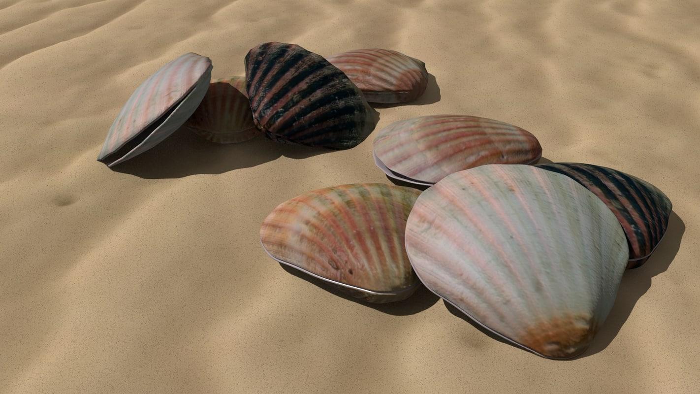 sea shells 3d model