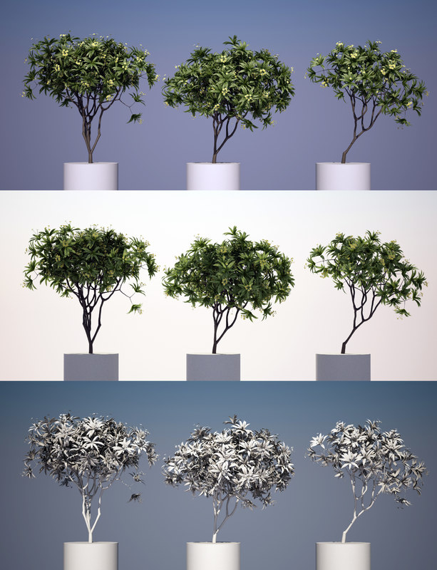 kamboja tree 3 modeled 3d model
