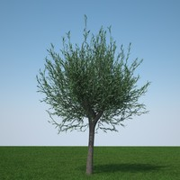 obj pollard willow tree