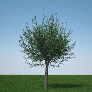 obj pollard willow tree