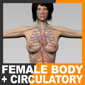 anatomically human female body 3d model