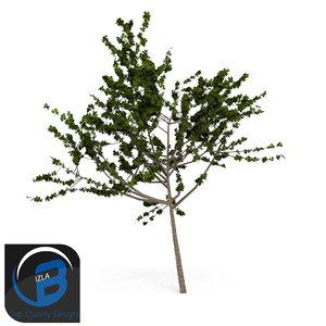 tree leaf obj