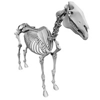 3ds max horse skeleton