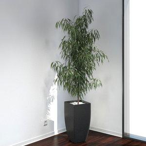 oleander plants growfx 3d obj