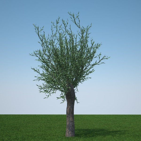 c4d pollard willow tree