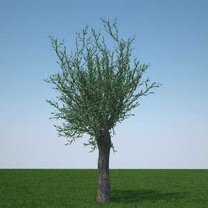 c4d pollard willow tree