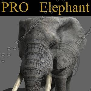 3d model elephant rig