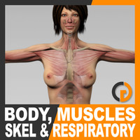 Human Female Body, Muscular, Respiratory System and Skeleton - Anatomy