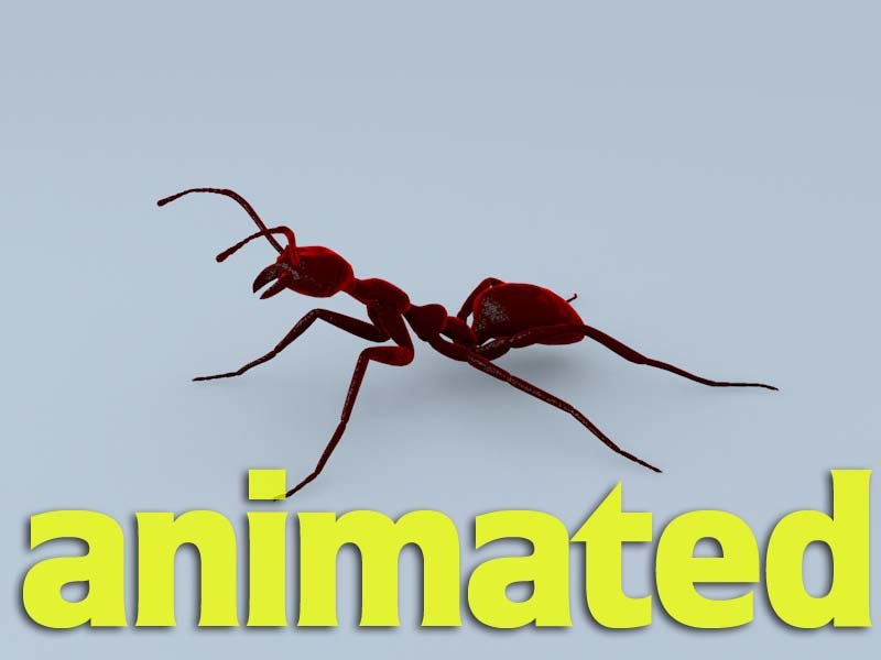 cinema4d ant character dynamic