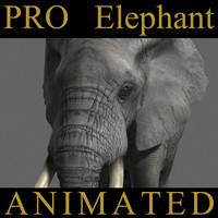 PRO Elephant ANIMATED