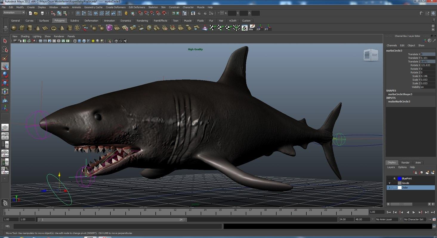 rigged shark ma