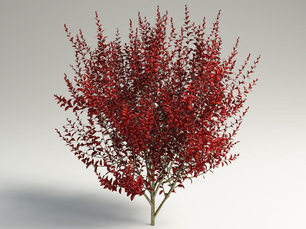 plum prunus 3d model