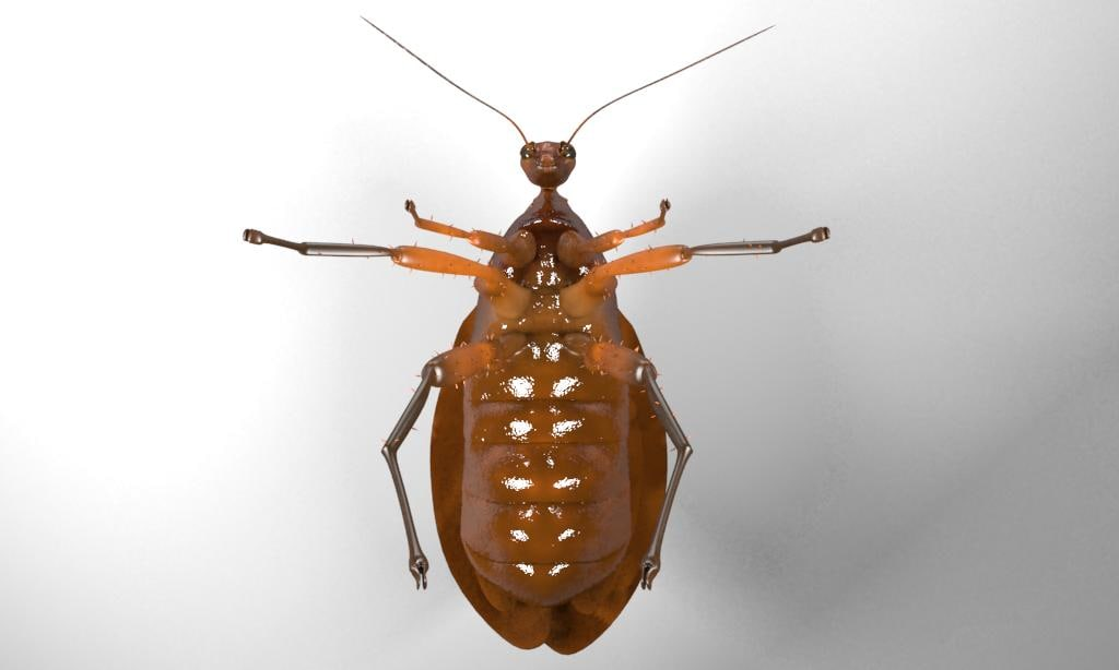 3d model cockroach rigged