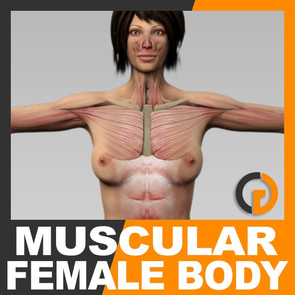 3d anatomically human female body