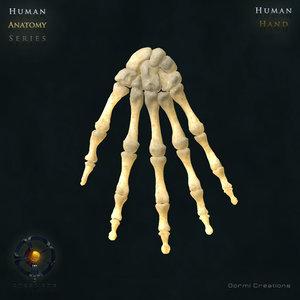 human hand bones 3d max