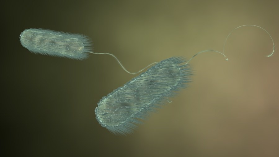 3d model hair flagella