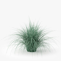 3d model of carex ornithopoda