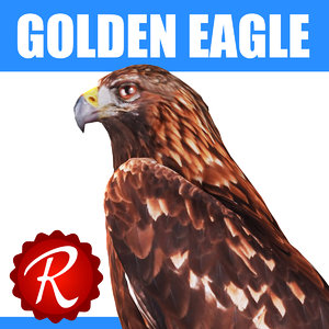 3d model of golden eagle