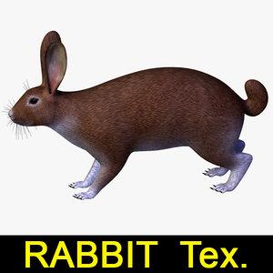 rabbit max