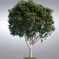hi realistic series tree 3d max