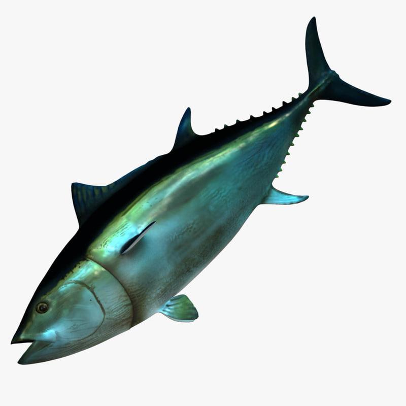giant bluefin tuna 3d obj