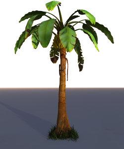 banana tree palm max