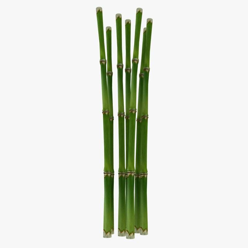 3d fresh bamboo cane