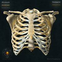 Thoracic Skeleton
