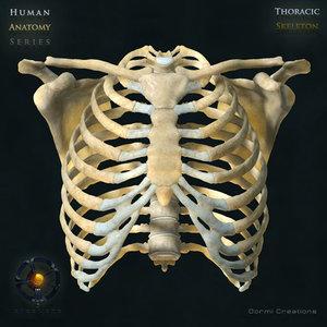 human thoracic skeleton bones 3d max