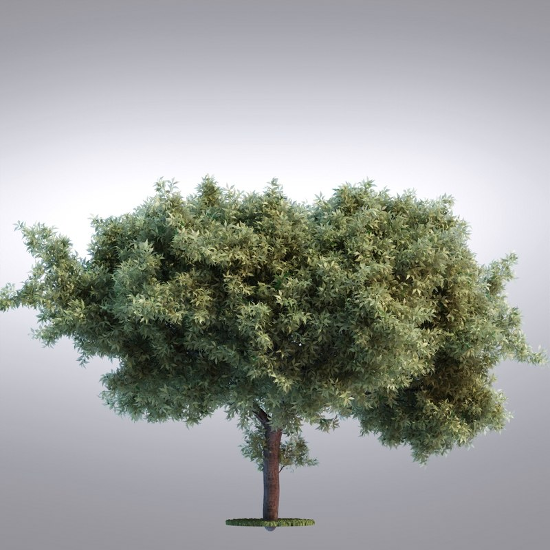 hi realistic series tree obj