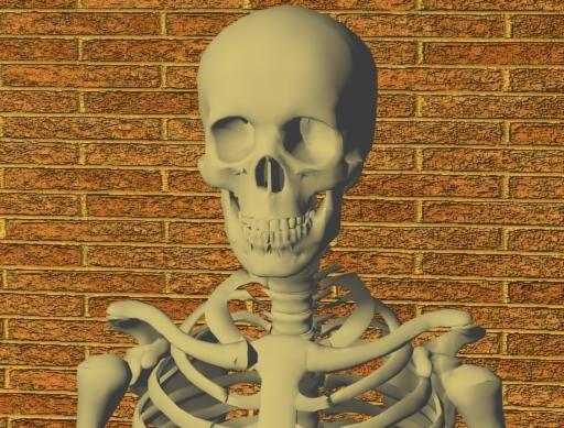 max bones skeleton