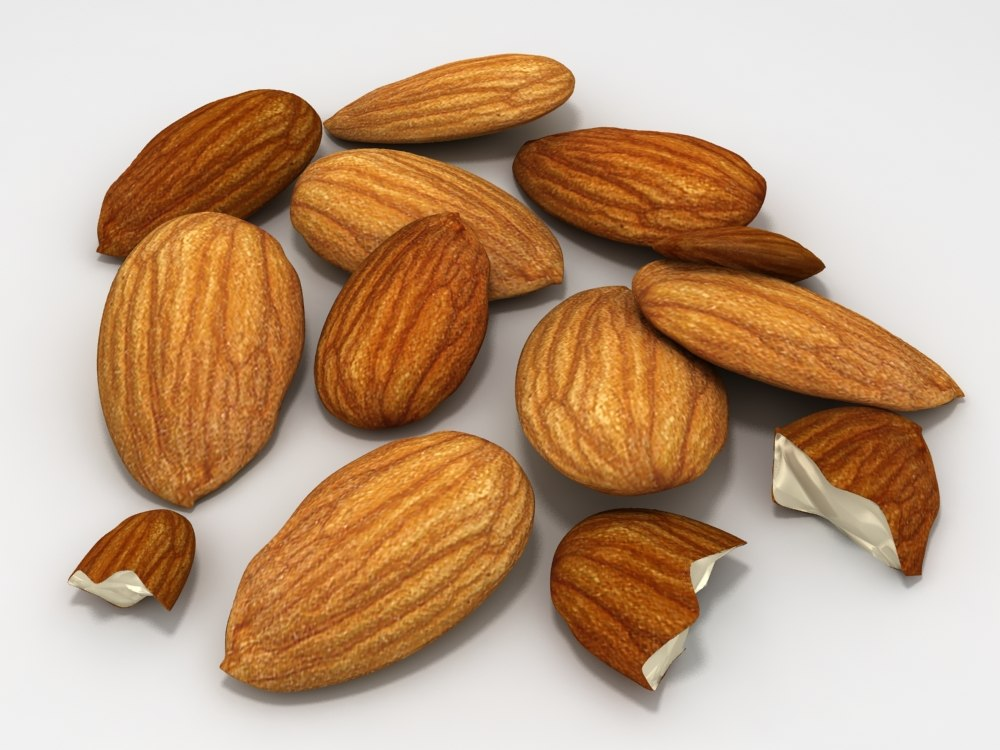 almond unshell shell 3d model