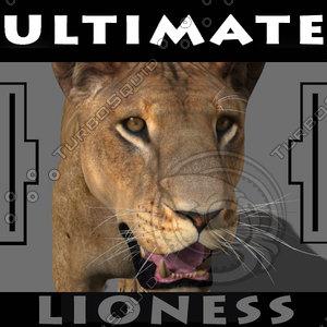 lioness animation fur 3d model