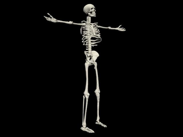 3dsmax simple skeleton