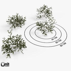 set plant max