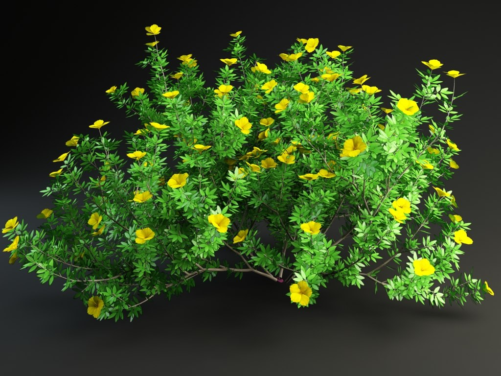 potentilla 3d model
