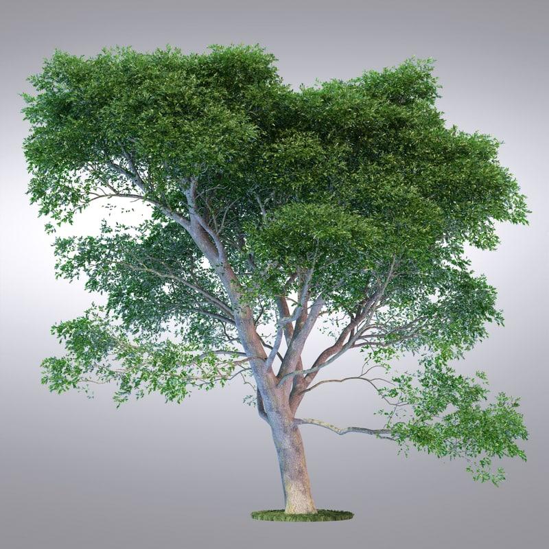 hi realistic series tree 3d max
