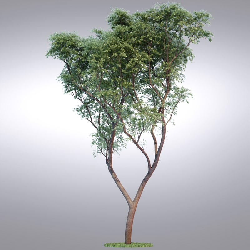 realistic tree 3d max