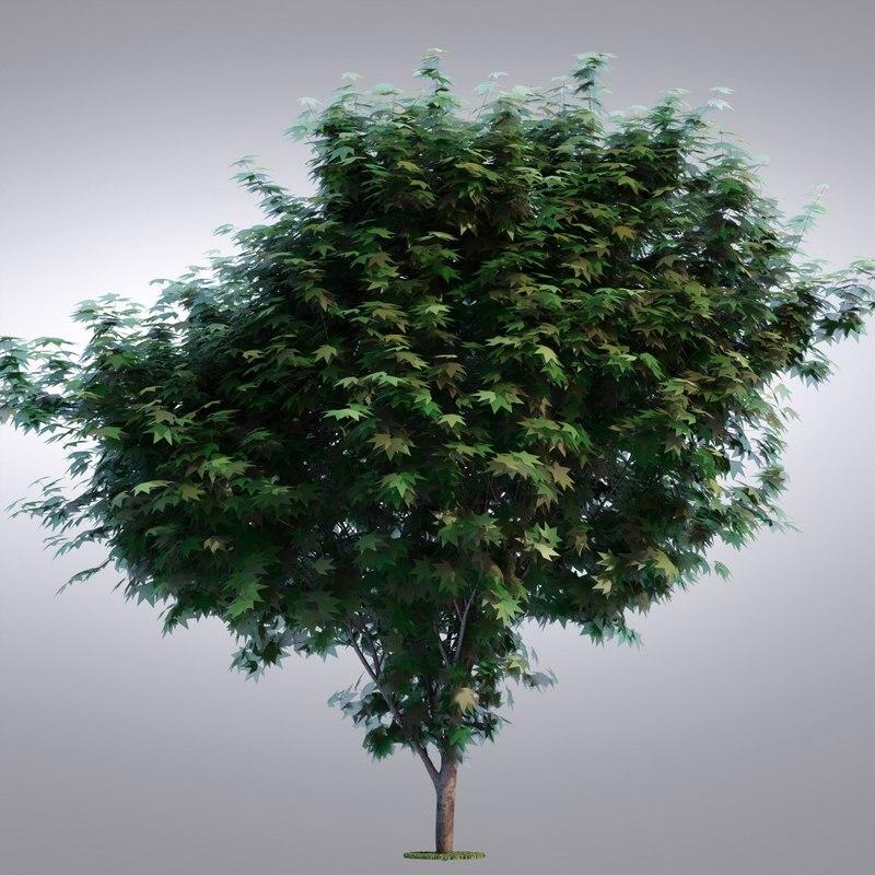 3d realistic tree